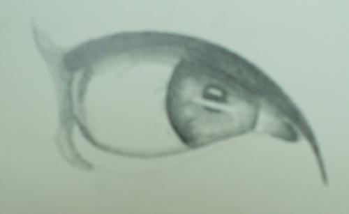 la forma de dibujar un ojo