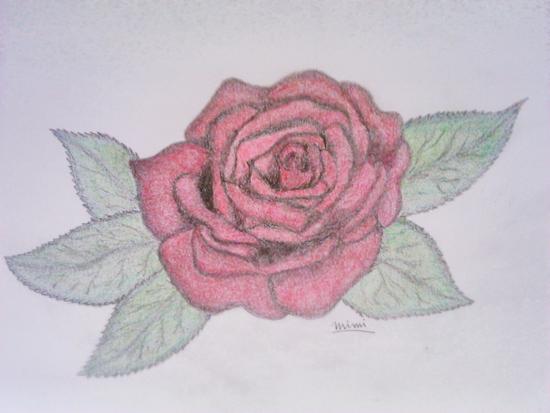rosa dibujada a lapiz