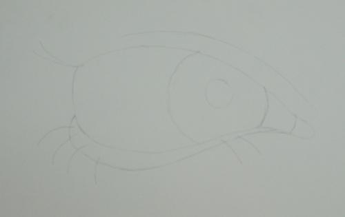 trazar dibujos a lápiz