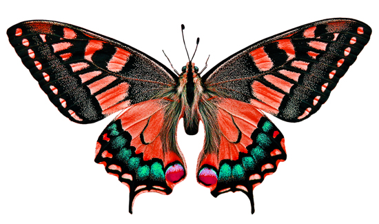 pintu ta mariposa