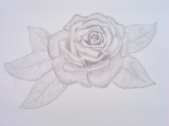 Rosas Para Dibujar A Lápiz