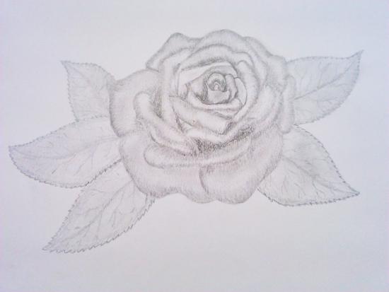 dibujo de una rosa a lápiz