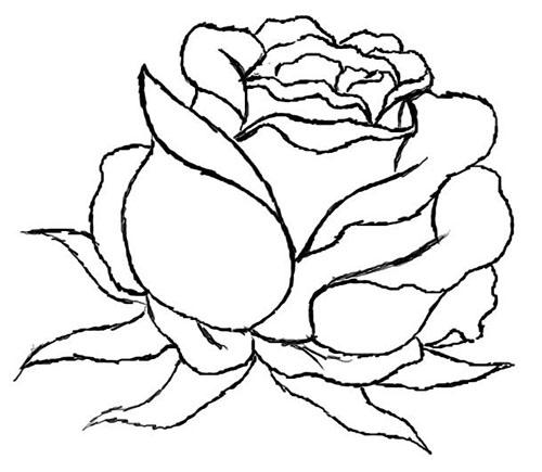 fotos de rosas para dibujar