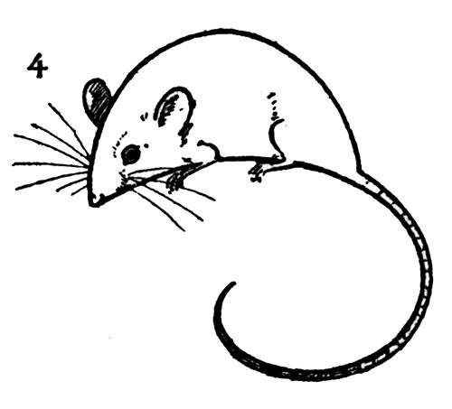 Dibujos de ratones para niños - Imágenes de ratones en dibujos