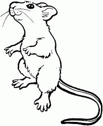 raton colorear