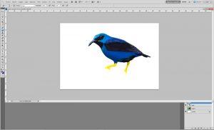 dibujos digitales de calidad