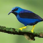 dibujo digital de pájaro azul