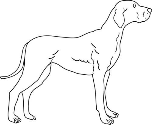como-dibujar-un-perro-para-niños