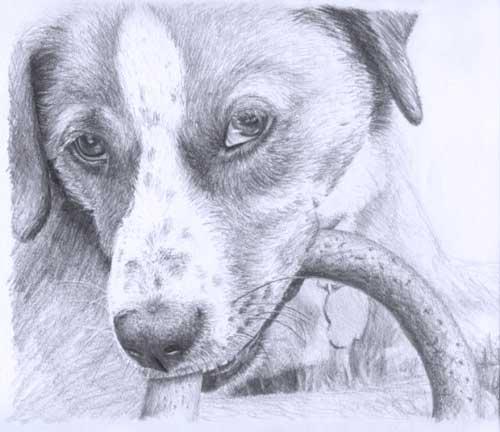 como-se-dibuja-un-perro