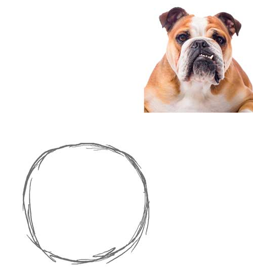 dibujar-un-bulldog-paso-a-paso