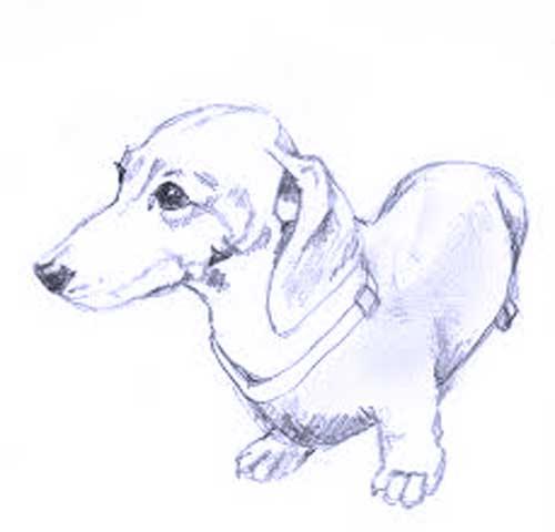 dibujo-de-perro-salchicha