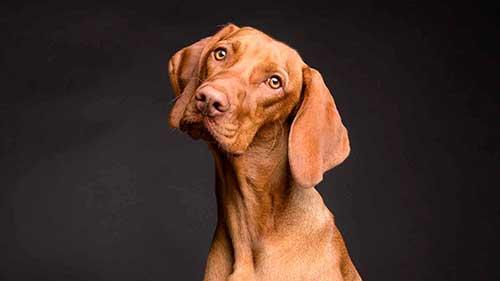 fotos-de-perros