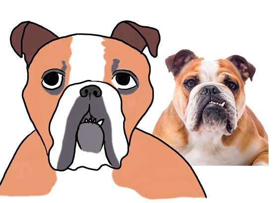 perro-buldog