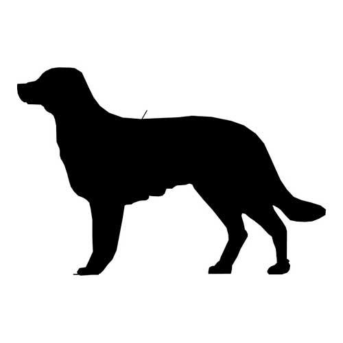 perro-lindo-en-silueta