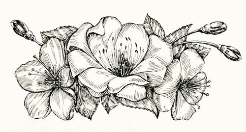Dibujos de flores - Distintas flores para dibujar y colorear