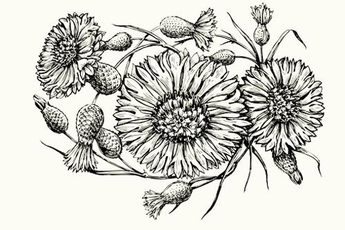 otras flores margaritas