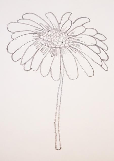 dibujos de mariposas y flores