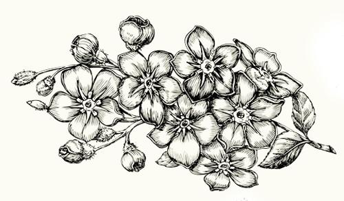 mis dibujos de flores bonitos