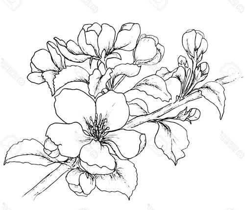 Dibujos De Flores Distintas Flores Para Dibujar Y Colorear