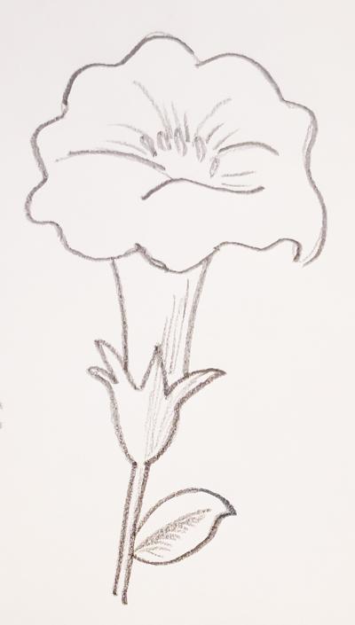 dibujos de amapolas