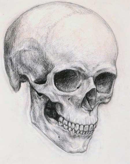dibujo con calavera
