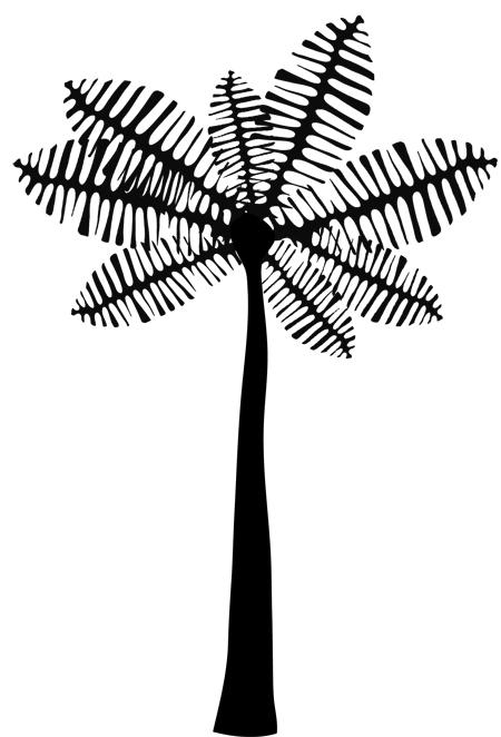imagenes de palmeras dibujadas